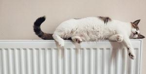 Gato sobre radiador calefaccion
